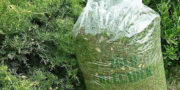 Újraindul a házhoz menő zöldhulladék gyűjtés